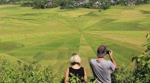 Spider Rice Field komodooneclick