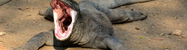 Komodo and Flores Tour Packages